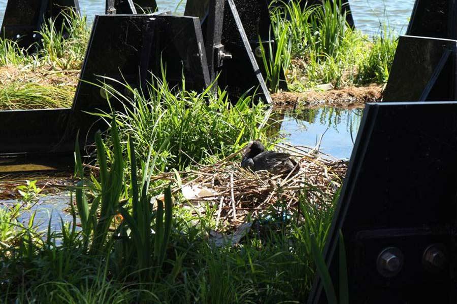 WEWE Natural Faner/ógamas Marinas Residuos Contenedores,Redondo Abierto Bote De Basura Peque/ña Papelera Hecho A Mano para El Hogar Dormitorio Oficina Exterior-Talla Peque/ña 24x22cm 9x9inch
