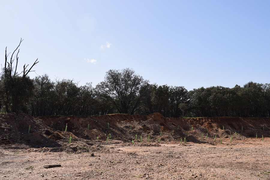 Zona en la que se han plantado quinientos nuevos ejemplares
